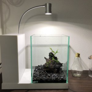 評判の良い一体型水槽「AQUA-U」を2年間稼働させたレビュー|MachiMochiWeb
