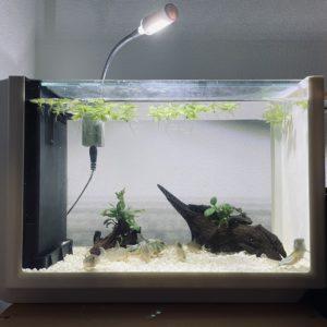 意外に口コミの良い一体型水槽、Views(ビュース)をレビュー|MachiMochiWeb